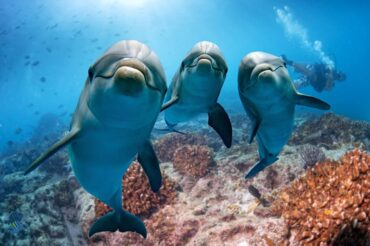 What is the Internet of Unterwater Things - dolphins looking curious
