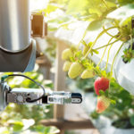 Strawberry picking robot