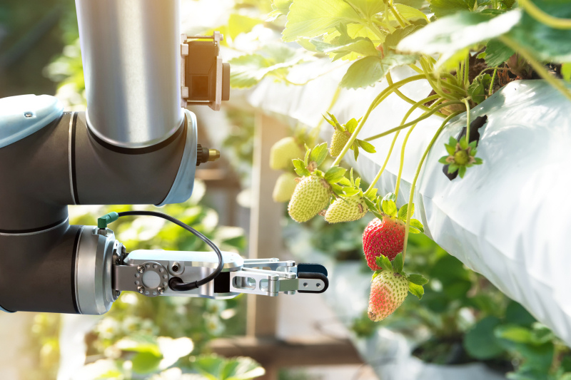 Strawberry picking robot
